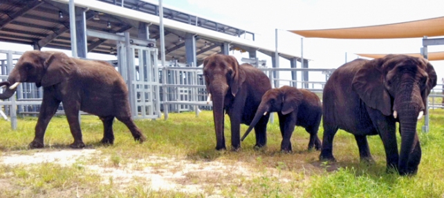 Elephant Center - first family group in paddock