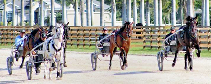 May - Harness Racing - Svanstedt Stable USA 2B