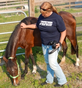 Humane Society of Vero Beach and IRC Director of Animal Protection Ilka Daniel monitors Rosie, one of two malnourished horses currently being cared for by the shelter. Both Rosie and a horse named Billy were voluntarily surrendered to the shelter by their owner.