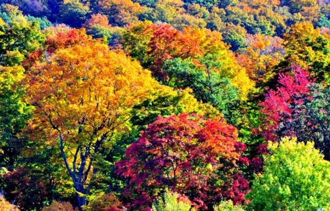 Fall Colors 10-1-14 B