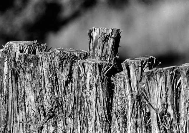 Fence_1_111115