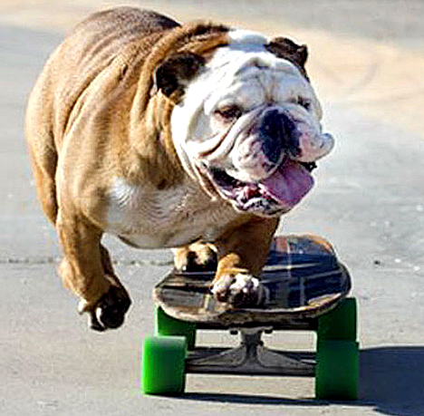 One public-private partnership recently led to the creation of a fenced-in, off- leash dog park. Another proposed partnership may lead to the building of a skate board park at Leisure Square. Still to be determined is the question of whether dogs will be allowed to use the skate board park.